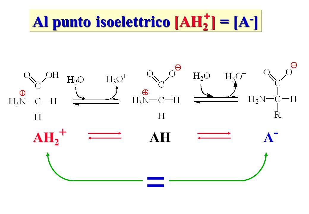 Al punto isoelettrico [AH2 ] = [A-]